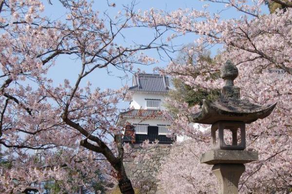 樱花攻略-九州季里攻略美图片